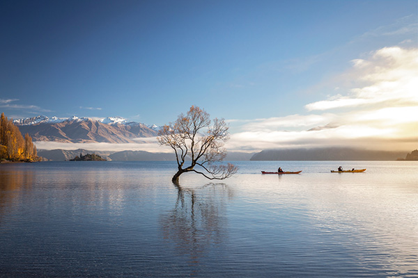 Lake Wanaka - Lonely tree