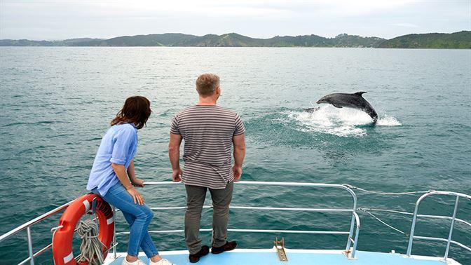 Dolphin watching in the Bay of Islands