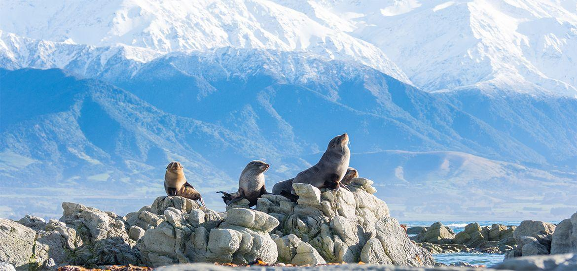 16 Day Neuseeland Wildlife Encounters