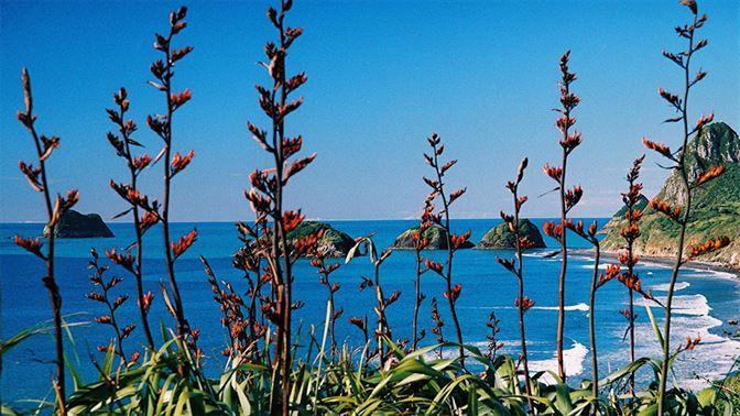 Mokau coastline