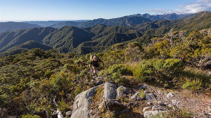 Paparoa National Park Hiking